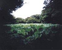 Pinhole_lotusbond_1
