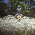 自作ピンホールで撮ったピンホール写真a_京都府立植物園
