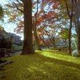 自作ピンホールカメラ(ブローニー)の写真_京都・鷺森神社