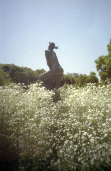 自作ピンホールで撮ったピンホール写真b_京都府立植物園
