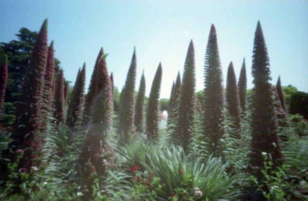自作ピンホールで撮ったピンホール写真c_京都府立植物園