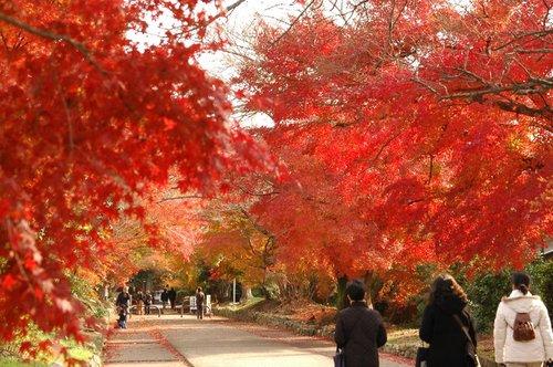 鷺森神社(京都)の紅葉2006