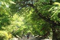 鷺森神社-新緑2