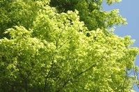 鷺森神社-新緑4