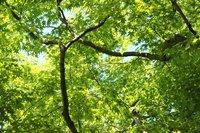 鷺森神社-新緑3