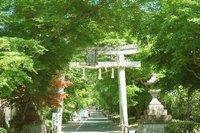鷺森神社-新緑1